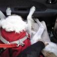 ルナ、車でこの格好!?