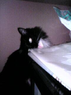 猫はビニールを舐める。