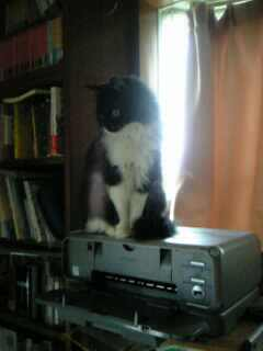 猫はプリンターが好き