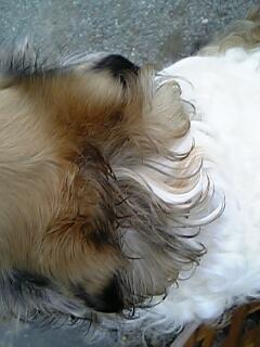 ルナの美しい毛がぁ〜!