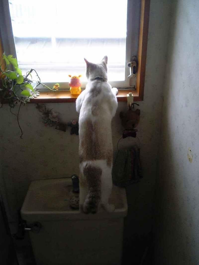 猫は、立姿がタマラナイ!
