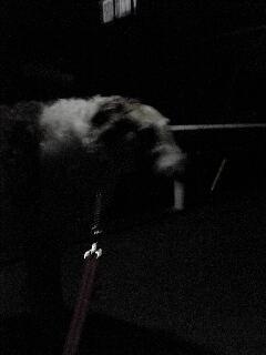 ルナと、夜の散歩。