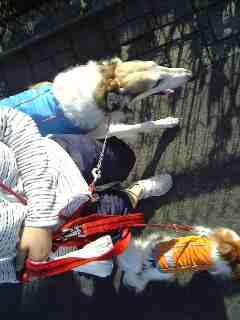 ルナとサリー、仲良く散歩。