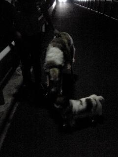 サリーとルナと娘と私、夜の散歩