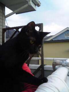黒猫って、撮るのが難しい〜!