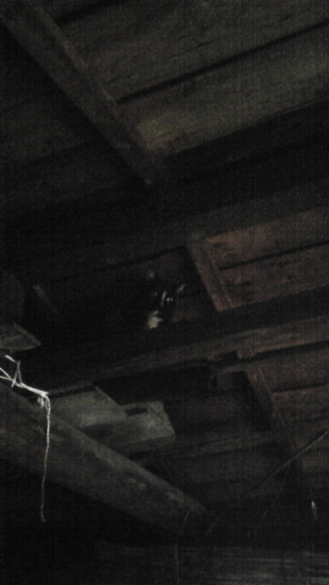 野良ニャンコ、車庫に一泊!?