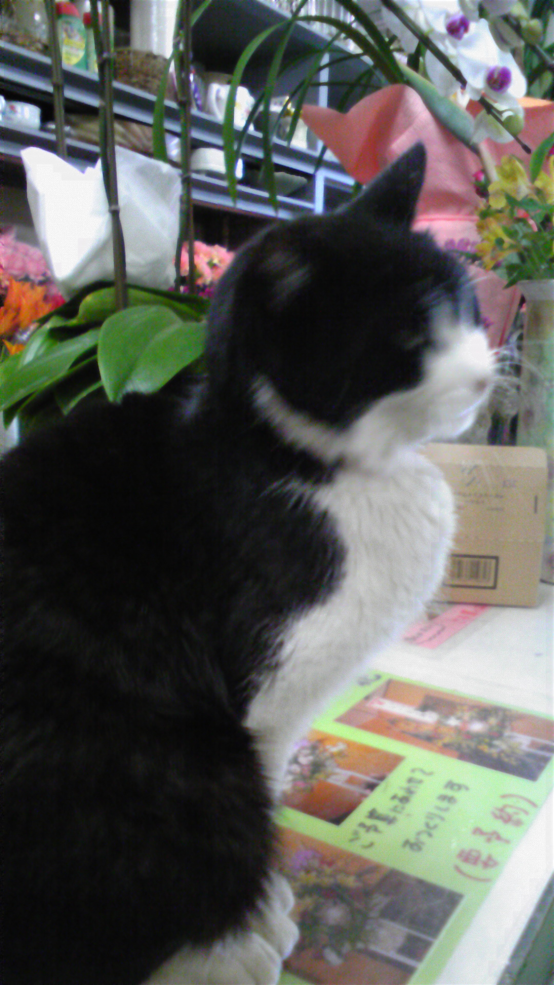 ミミのママは、お花屋さんの看板猫。
