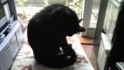 猫達、シャンプーしました!