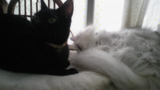 静かな昼下がり、外は雨、猫はお昼寝。