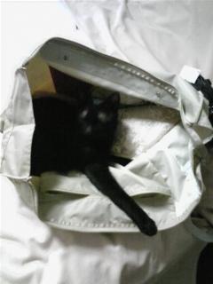 鞄を乗っ取られた(>_<)