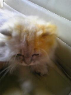 姫の頭が真っ黄、黄??(<br />  ゜Q。)??