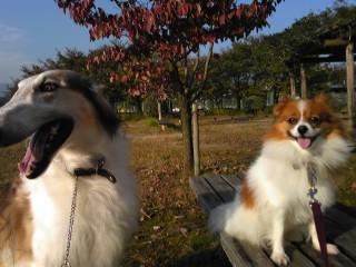 ボルゾイもパピヨンも美しく撮れる秋晴れ!