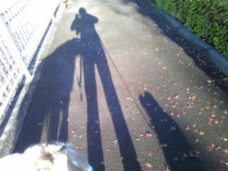 朝の散歩で迷い犬!?
