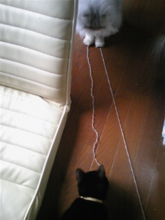 編物は、猫達の本能をそそる(>_<)