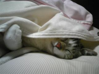 寒いからお布団掛けて寝る(<br />  ∪o∪)<br />  。。。
