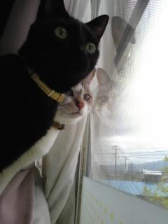 猫のシンクロ!