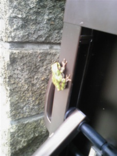 蛙を掴んだ!