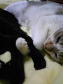 バロンとメイが、絡まって寝ていた(^O^)/