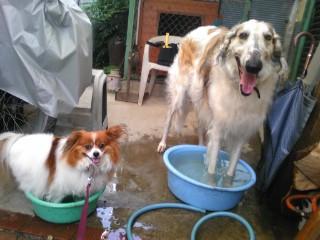 暑い日には、二匹で水浴び!