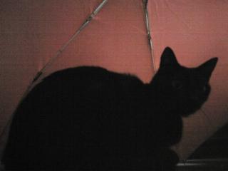 猫は、傘がお気に入り(^O^)