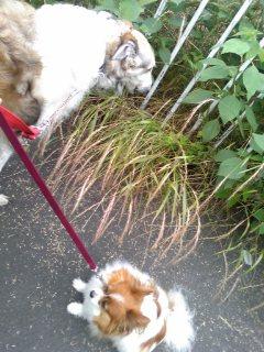 サリーは、雑草が顔にアタル(>_<)