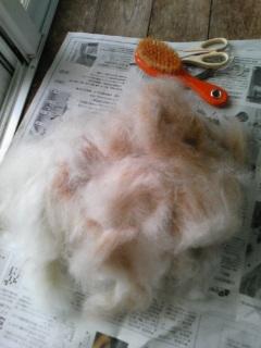 サリーの毛を剥いた。
