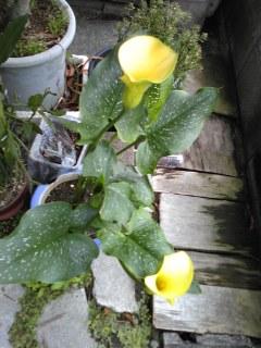 母が育てた花達。