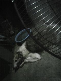 夜の散歩も、暑いねぇf^_^;