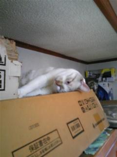猫なのに!