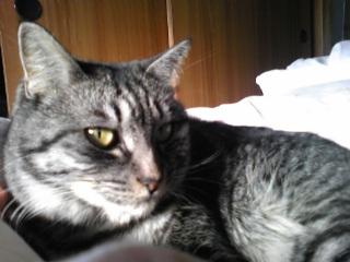 実家の愛猫「ミミ」!
