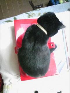 猫達は箱が好き!