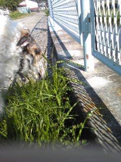 ルナは吐きたいと、草を食べるが…f^_^;