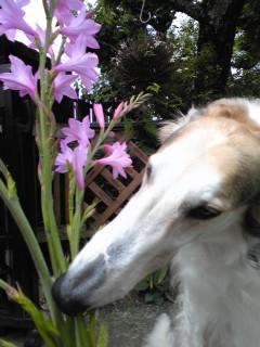 ご近所の方に、お花を頂きました。