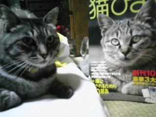 実家猫「ミミ」、雑誌の子に、よく似てる(^O^)