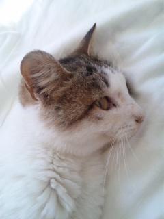 文、食欲が有りすぎて、猫砂も食べる(^_^;)