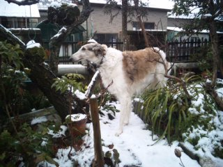 ルナもサリーも雪は平気\(^o^)<br />  /
