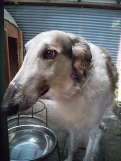 ルナ、狂犬病の注射をしてきました。第2話