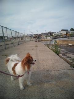 実家に行って来ました。途中、那珂港の市場に寄りました。