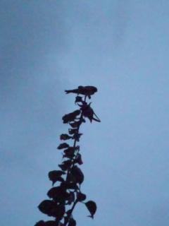 燕は、飛ぶ練習)^o^(