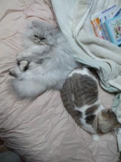 寒さが二匹を近付ける(^O^)