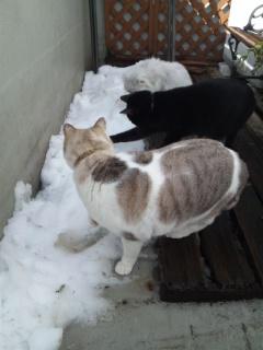雪が楽しかった?