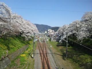 昨日は、桜祭りのメインイベントの日でした。