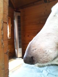 犬舎にタワー型の扇風機を入れました。ルナの調子も、サリーの耳も良くなりました(^<br />  ○^)