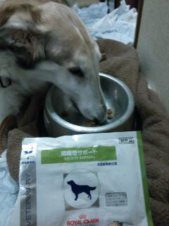 ルナ、今日は水飲んで、試供品のドライフード、しっかり食べた!!(゜ロ゜ノ)ノ