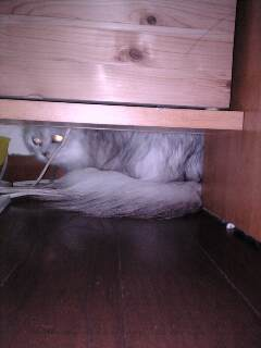 机の下が非難場所!