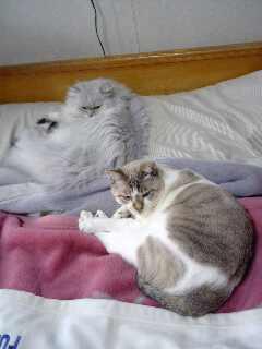 バロンと姫寒さが二匹を近付ける