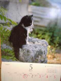 まだ、五月のままのカレンダー