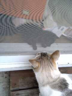 子猫の名前は「メイ」。