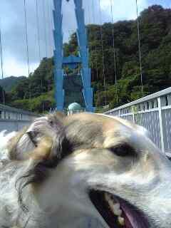 ルナと龍神橋に行きました。